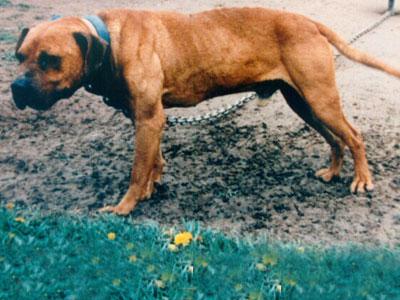 Game Dogs 2 Fae8e3a07a2728b7