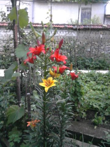 Покажете цветята във  вашата градинка... 747f027144f13331