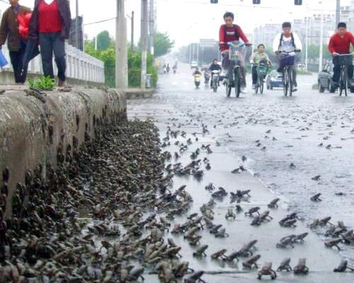 Много жаби картинки
