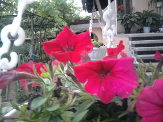 Покажете цветята във  вашата градинка... 153268127a424a99