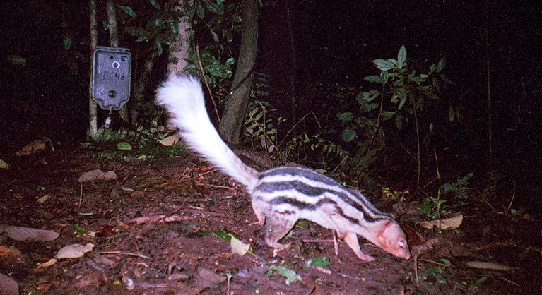 Fauna impressionante de Madagascar. C5ec62aa06664c4a