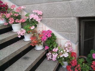 Покажете цветята във  вашата градинка... C658e815a3bb78ea