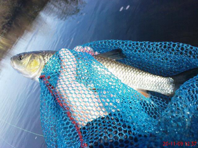 Риболова на муха продължава 4236c6dffbd68880