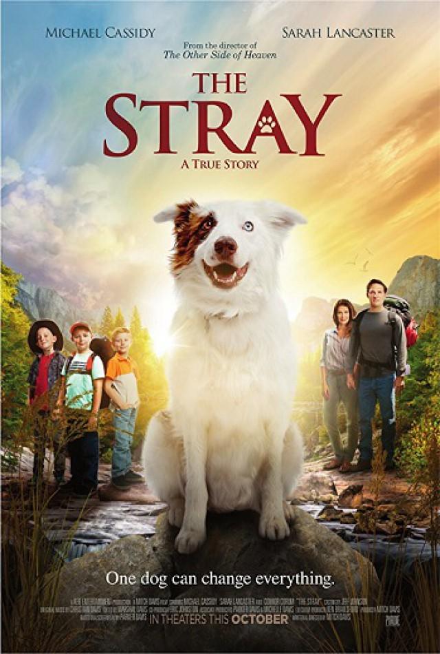 The Stray / Изгубен (2017)