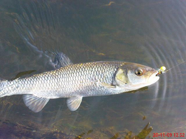 Риболова на муха продължава 885b53cfe6f49f71