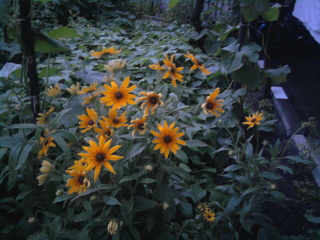 Покажете цветята във  вашата градинка... 54634576d97ca4e8