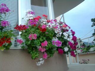 Покажете цветята във  вашата градинка... 85061ae838f6f7e0